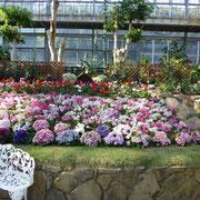大温室 花壇