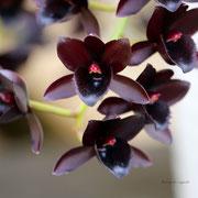 ラン アフターダーク  奇跡の星の植物館