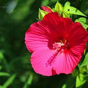 タイタンビカス  奇跡の星の植物館