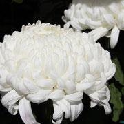 三原文化祭 島田幸平さん