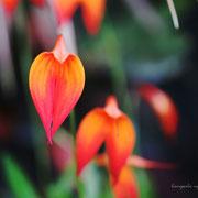 ラン 奇跡の星の植物館