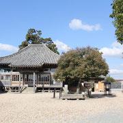 菩提樹と旧本堂