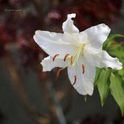 カサブランカ 奇跡の星の植物館