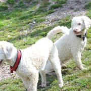 Weiss & Weiss-Caramell