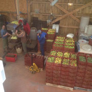 Fabrication du jus de pomme