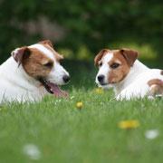Maurice & Twinkl