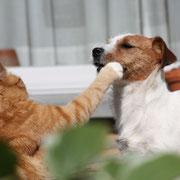 Pussycat & Twinkl