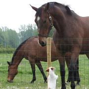 Hello big horse!