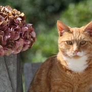 Pussycat Ollie