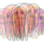 """Spectrum<BR><FONT size=""""1"""">100 x 160cm R.K. 2012</FONT><BR>"""