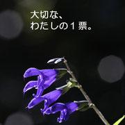 038 太郎 花守り