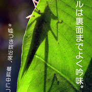 041 太郎 花守り