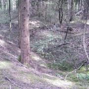 Grabensystem im Bergwald