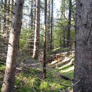 Gräben am Pfefferrücken