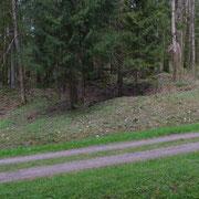 Wo damals die Häuser standen ist heute Wald