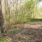 Eintritt in den Wald