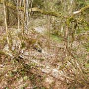 Der Bergwald heute
