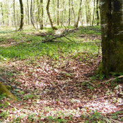 Der Hassoulewald