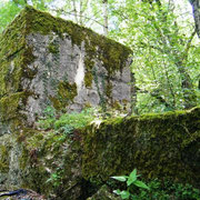 Bunker im Dickicht