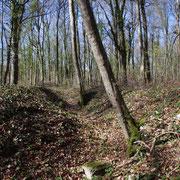Das Gelände im Umfeld - überall noch erkennbare Gräben