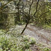 Forstweg durch die Schlucht