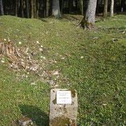 Nur noch ein paar Steinbrocken erinnern an die Existenz des Bauernhofes