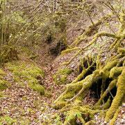 Von Bäumen und Büschen fast zugewucherte Unterstände