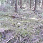 Der Bergwald