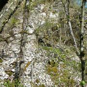Hinter den Büschen zeigt sich der Steinbruch mit seinen Unterständen