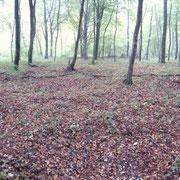 Waldstück, in dem die Ruinen liegen