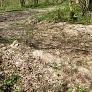 Im Vordergrund Blindgänger direkt neben dem Forstweg. In Verdun keine Seltenheit