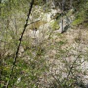 Felswand mit Unterständen