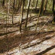 Stellung im Bergwald