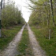 Forstweg - Bergwald