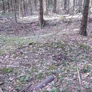 Blindgänger und Stellung im Bergwald