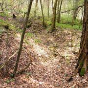 Laufgraben im Hang des Waldes