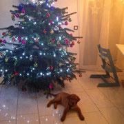 ... Christbaum im Vordergrund. Fehlen nur noch meine Geschenke.