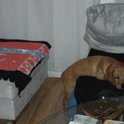 Wart nur, bis ich groß bin. Dann gehört das Sofa mir.