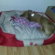 Eyk's neues Bettchen - wohlfühl.