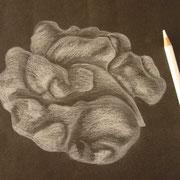 Baumnusskerne mit Weiss-Stift auf schwarzem Papier