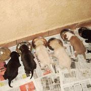 Indra´s 6 Babys