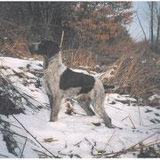 Sancho del Zeffiro 2004