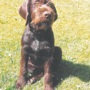 Castro II vom Spanger-Forst 2007