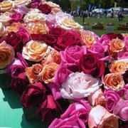 2017年 第44回平塚市緑化まつり 平塚市園芸協会花き部会ばら部会提供の切りバラで来場者とつくったバラアート
