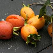 柿、これは渋柿。熟し柿は私の天敵!当分がメチャ高いのです。