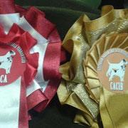 06.12.2014, IHA Wels: V1 / CACA / CACIB für Lottie! Herzliche Gratulation!