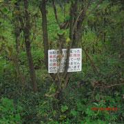 昔は駐車場?近くの雑木林で