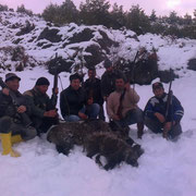 Domuz Avi