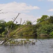 Les étangs Frise Camping pêche Somme