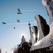 Palomas con estelas de avión. Parc Güell, Barcelona